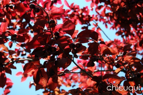 mermelada prunas chicuqui galletas decoradas 06